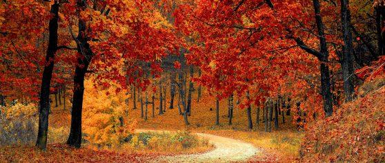 Endlich Herbst!