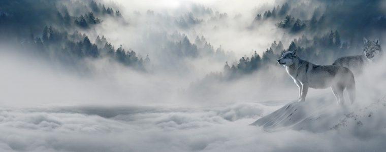Nebel (von Marius Schmieda)