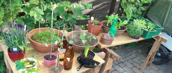Mein Garten, meine Wohlfühloase