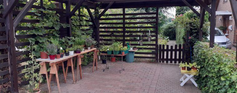 Mein Garten nach erfolgreichem Läusekampf